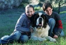Película Beethoven 5: El perro buscatesoros