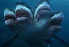 Escena de El ataque del tiburón de cinco cabezas
