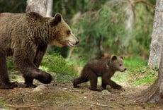 Película El oso