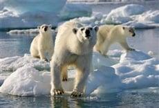 Escena de Frozen Planet