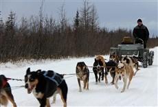 Escena de Hombres del Ártico