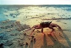 Serie La vida en la playa