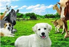 Película Adventures of Bailey: The Lost Puppy