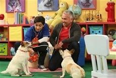 Escena de Mutt & Stuff, escuela de perros