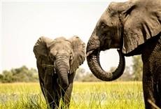 Televisión Namibia, Sanctuary of Giants