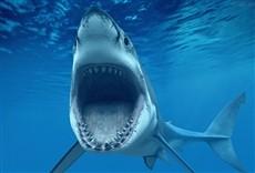 Serie O melhor de quando os tubarões atacam