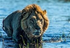 Serie Okavango: oasis de África