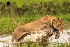 Escena de Okavango: oasis de África