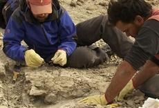 Serie Paleontología - Huellas de El Tranquilo