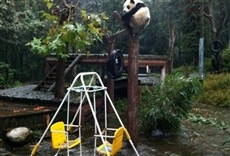 Escena de Pandas gigantes: criados en cautiverio