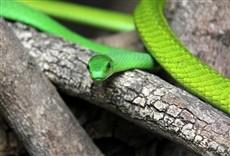 Serie Paraíso das serpentes