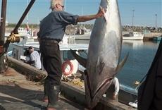 Escena de Pesca de gigantes