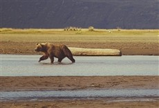 Escena de Protectores de Alaska