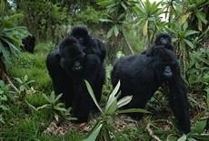 Película Reino de los simios