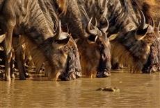 Escena de Ríos de África