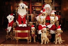 Película Navidad con los Buddies