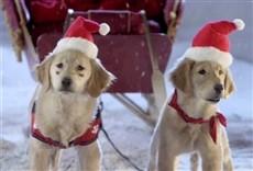 Escena de Navidad con los Buddies