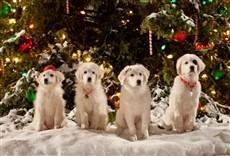 Película Santa Can 2: Los cachorros de Santa