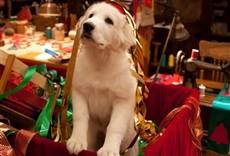 Escena de Santa Can 2: Los cachorros de Santa
