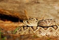 Escena de Serpientes monstruosas