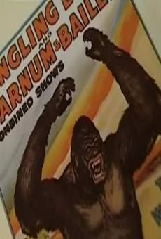Ver película A la sombra de King Kong