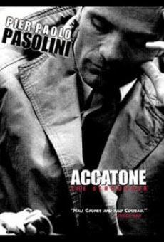 Ver película Accattone