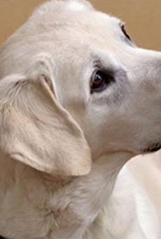 Películas de Riley the Dog