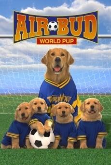 Ver película Air Bud 3: Los cachorros de Buddy
