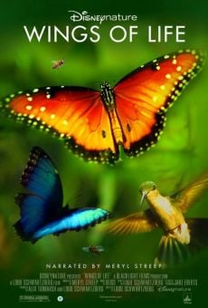 Disneynature's Wings Of Life online