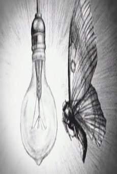 Ver película Anatomía de una mariposa