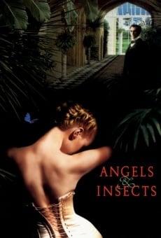 Ver película Ángeles e insectos