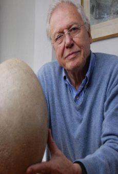 Ver película Attenborough y el huevo gigante