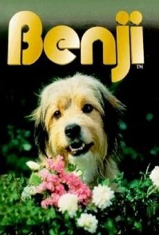 Ver película Benji