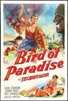Ver película Ave del paraíso