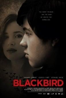 Ver película Blackbird