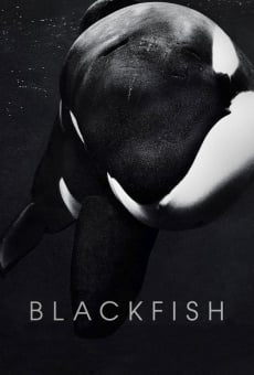 Blackfish on-line gratuito