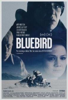 Bluebird online