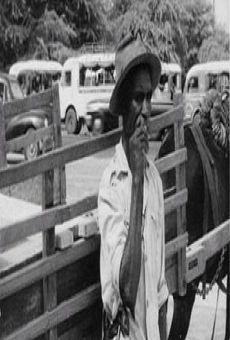 Ver película Borom sarret