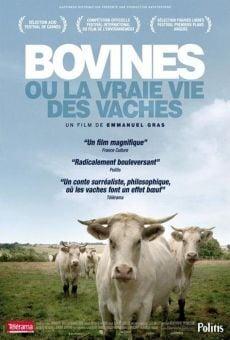 Bovines ou la vraie vie des vaches online