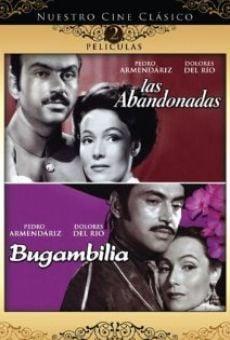 Ver película Bugambilia