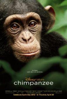 Película: Chimpancé