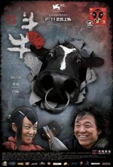 Cow online