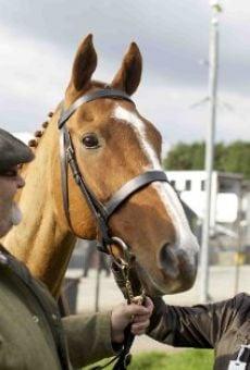 Watch Dark Horse online stream