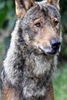 De lobos y hombres