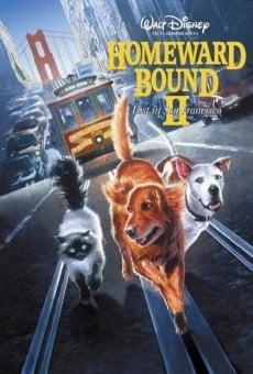 Ver película De vuelta a casa 2: perdidos en San Francisco