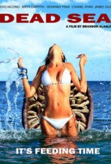 Ver película Mar Muerto