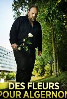 Ver película Flores para Algernon
