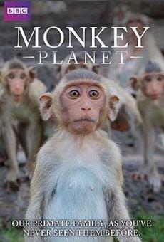 Película: Descubriendo a los monos