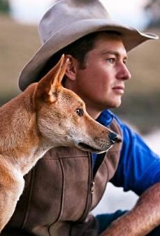 Ver película Dingo: Wild Dog at War