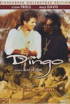 Ver película Dingo